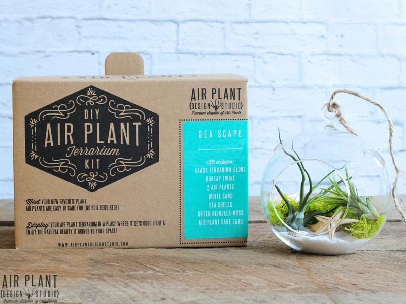 Air Plant Design Studio + A GIVEAWAY!