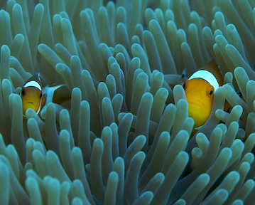 gili islands finds nemo.jpg