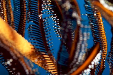 dive the gilis coral.jpg
