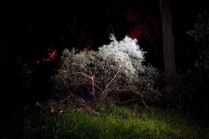 A Shouting Tree