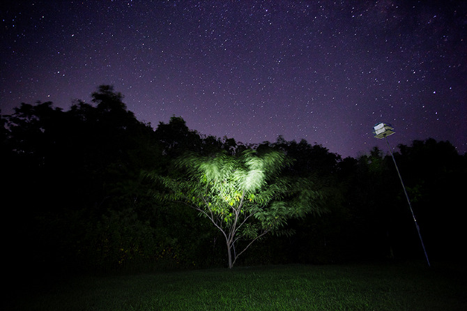 A Guardian Tree