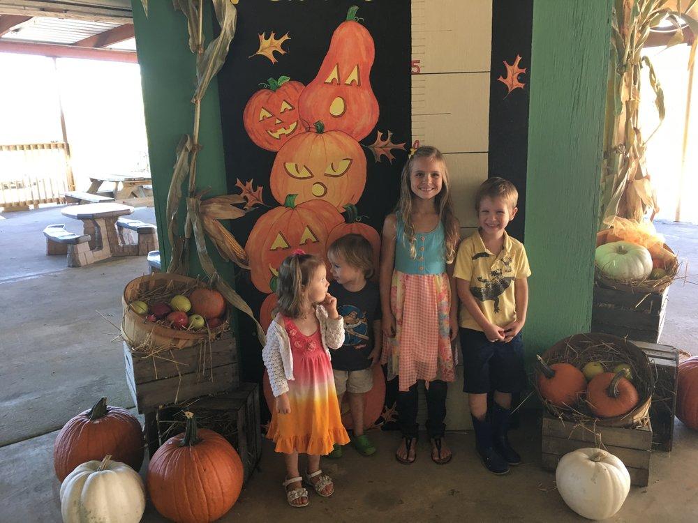 Pumpkin patch adventures 🎃🍁🍂
