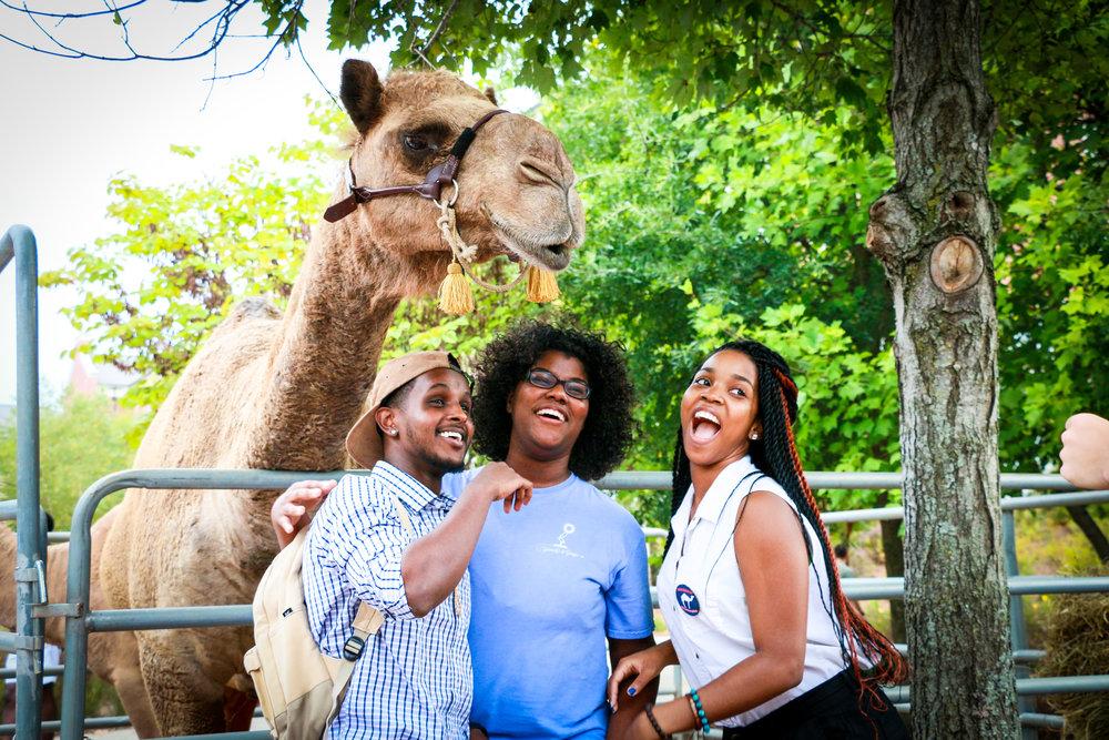 20. August. 2014. Camels UGA -0478.jpg