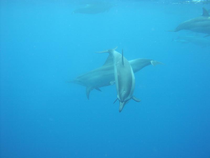 イルカのメロンから発せられるソナー(超音波)には、まだ科学で解明されない力がある。