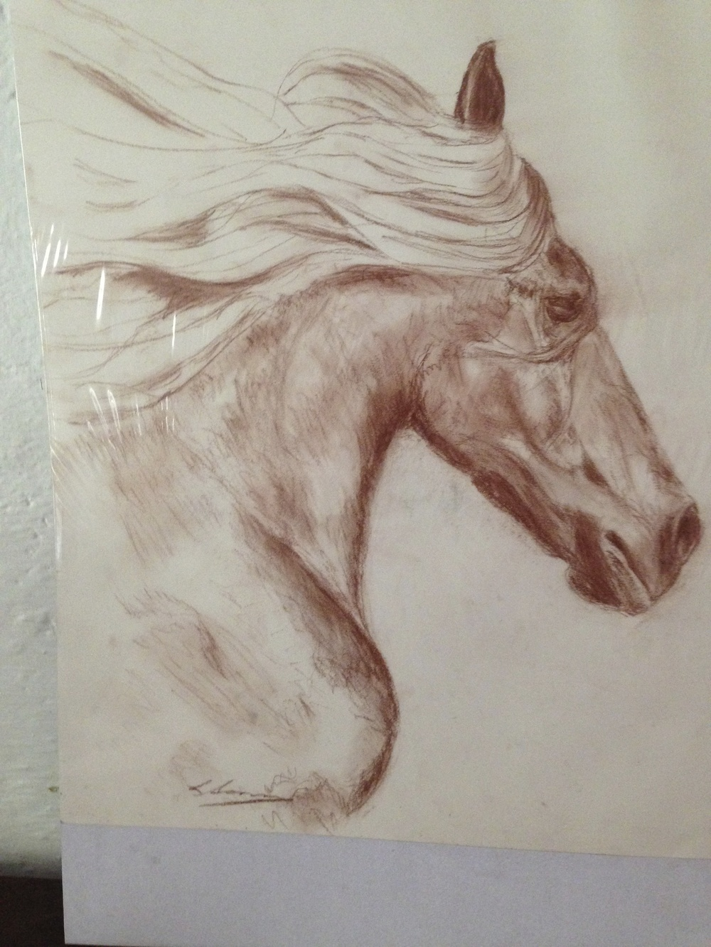 Thoroughbred, Pastel on paper.