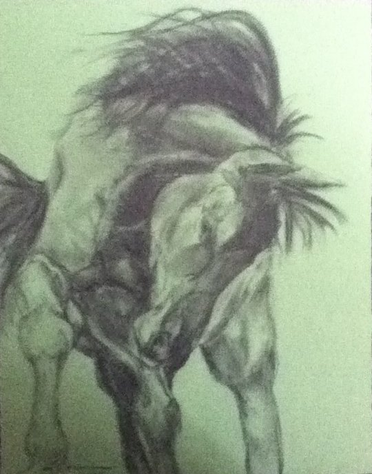 Bucking 1, Charcoal on green paper.