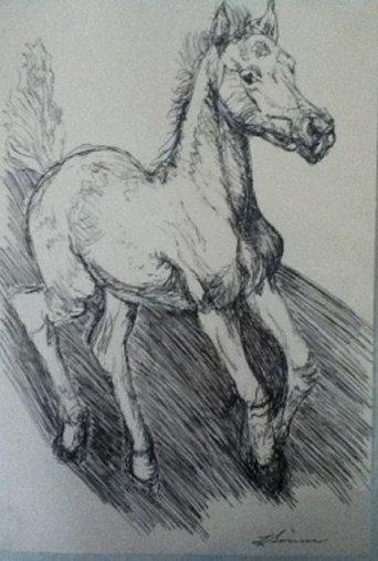 foal shadow.jpg