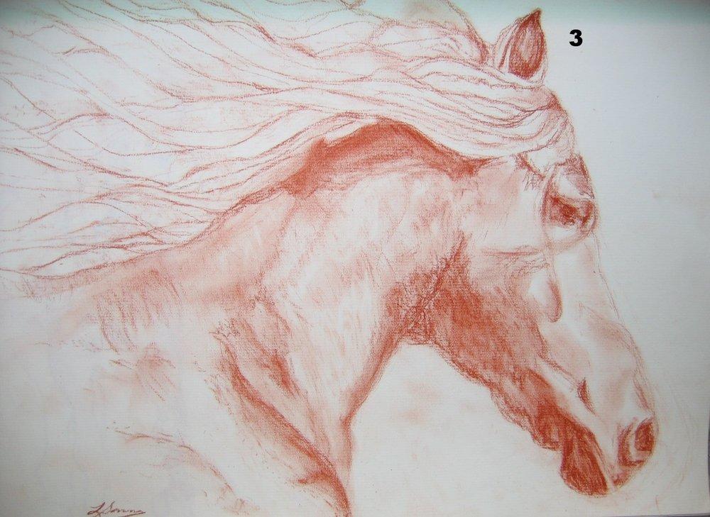 4- Bold Beauty, Pastel on paper.