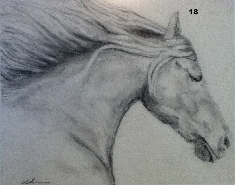 Silver Beauty, Charcoal on paper.