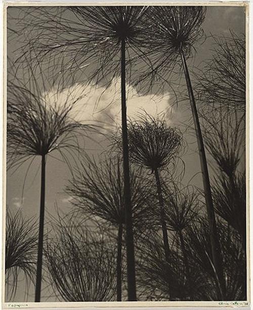 Olive Cotton - Papyrus, 1938
