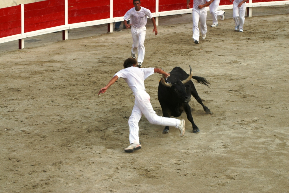 bull games in local village arenas