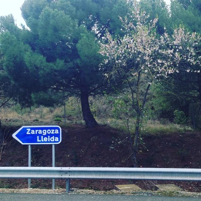 🇪🇸Tonight in Zaragoza @rockandblues_zgz, tomorrow in Lleida @musiquesdisperses 🇪🇸