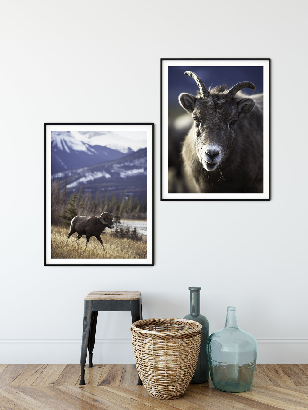 Left: The goat of the herd   Right: Belle