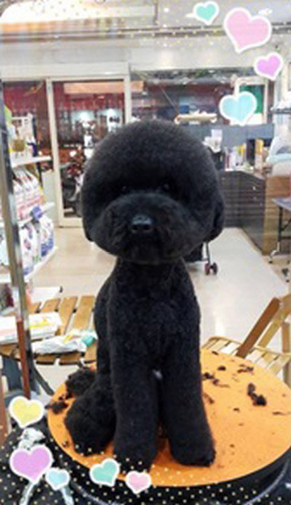 Round-Poodle.jpg