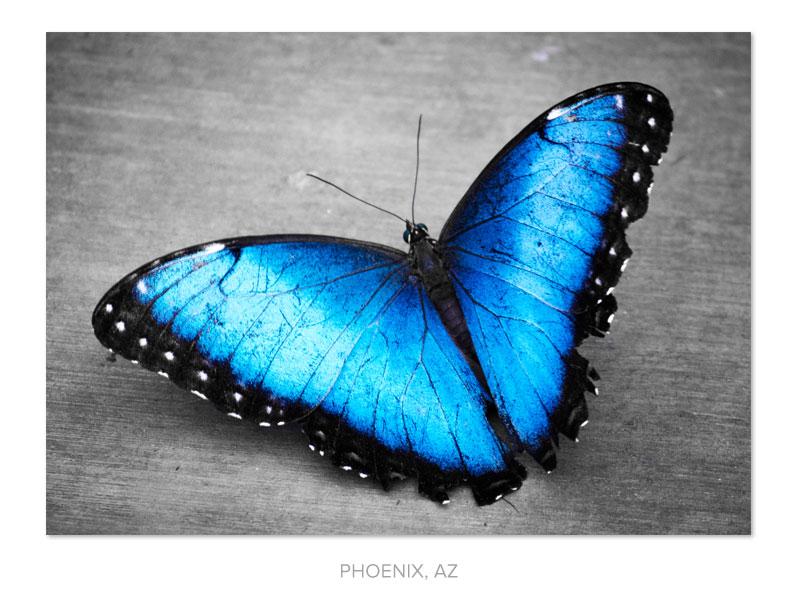 blue-butterfly.jpg