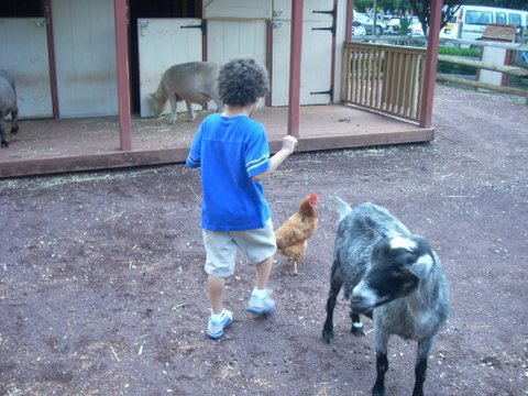 Children explore in the petting zoo