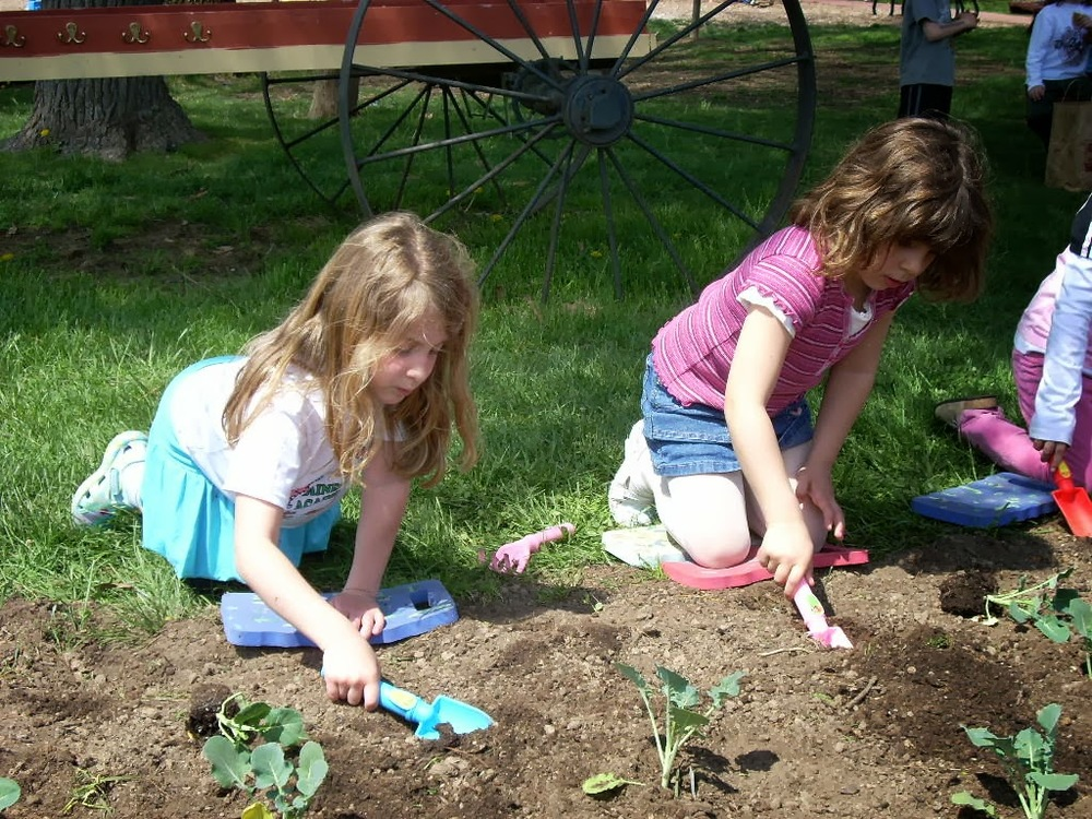 Gardening in the vegetable garden