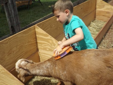 Grooming in Rainbow Academy's petting zoo.JPG