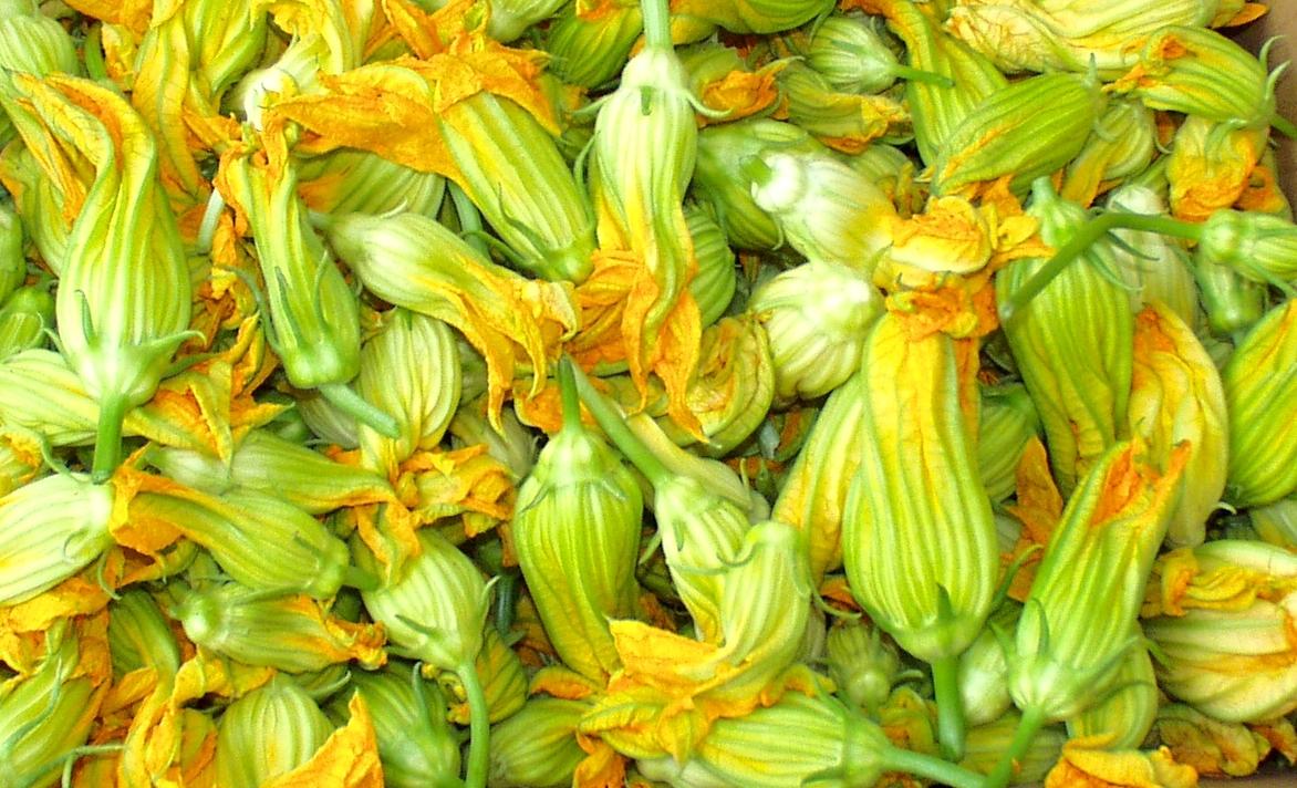 Alvarez Organic Farms squash blossoms. Photo copyright 2009 by Zachary D. Lyons.