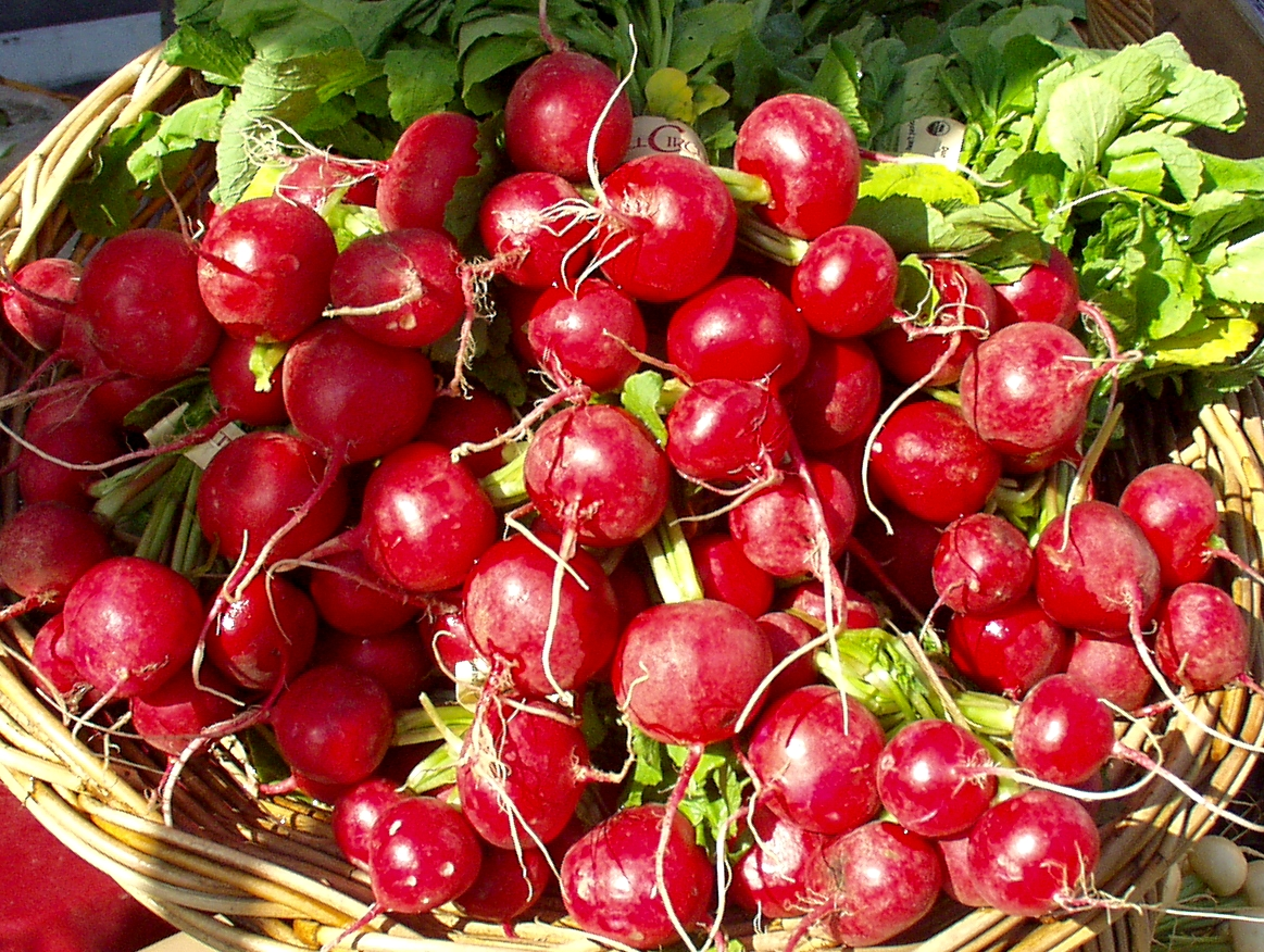 Full Circle Farm radishes shine brilliantly red in the afternoon sun. Photo copyright 2009 by Zachary D. Lyons.