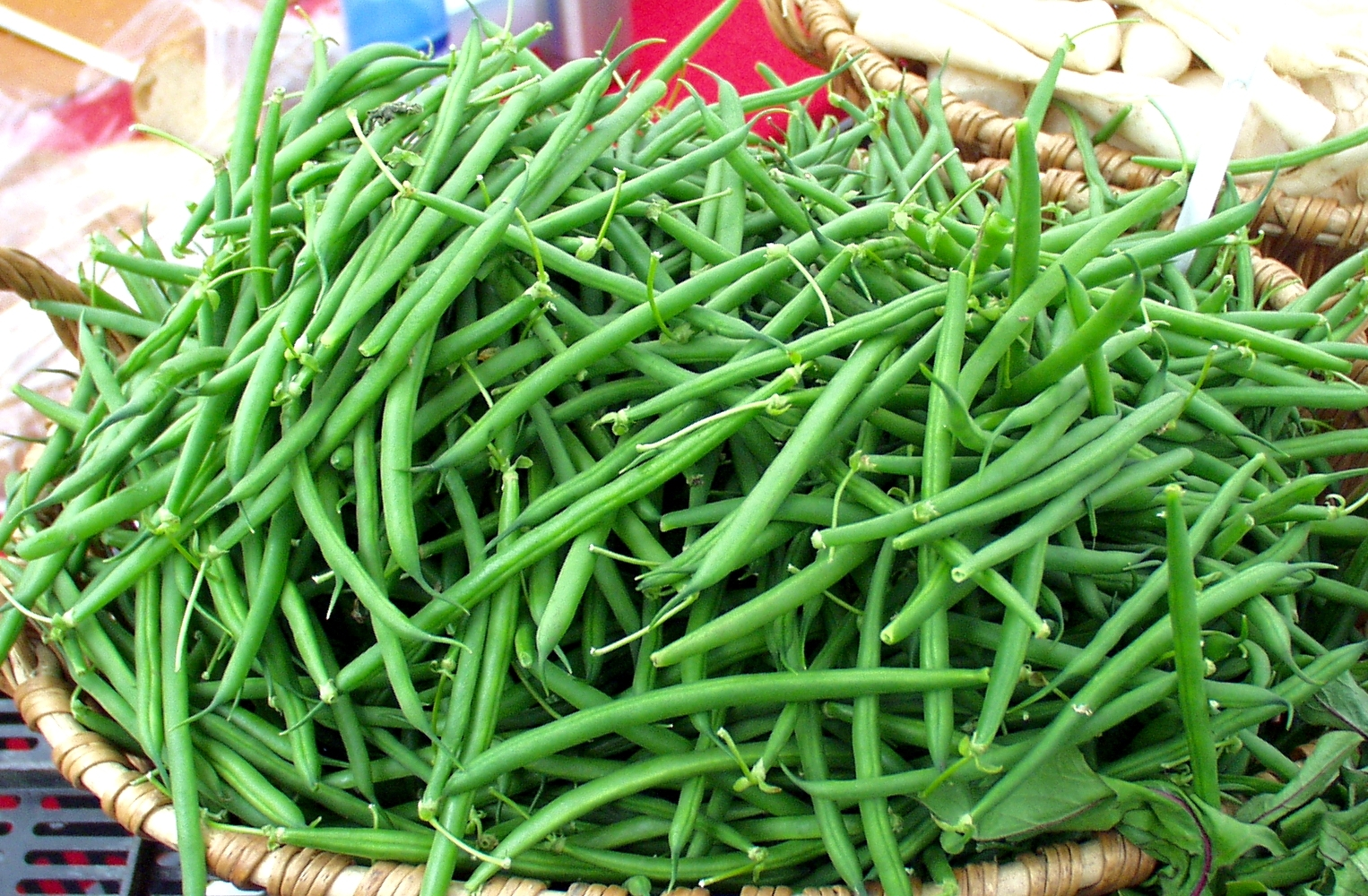 Stoney Plains harricot vert green beans, which for those who speak both French and English is redundant. Photo copyright 2009 by Zachary D. Lyons.