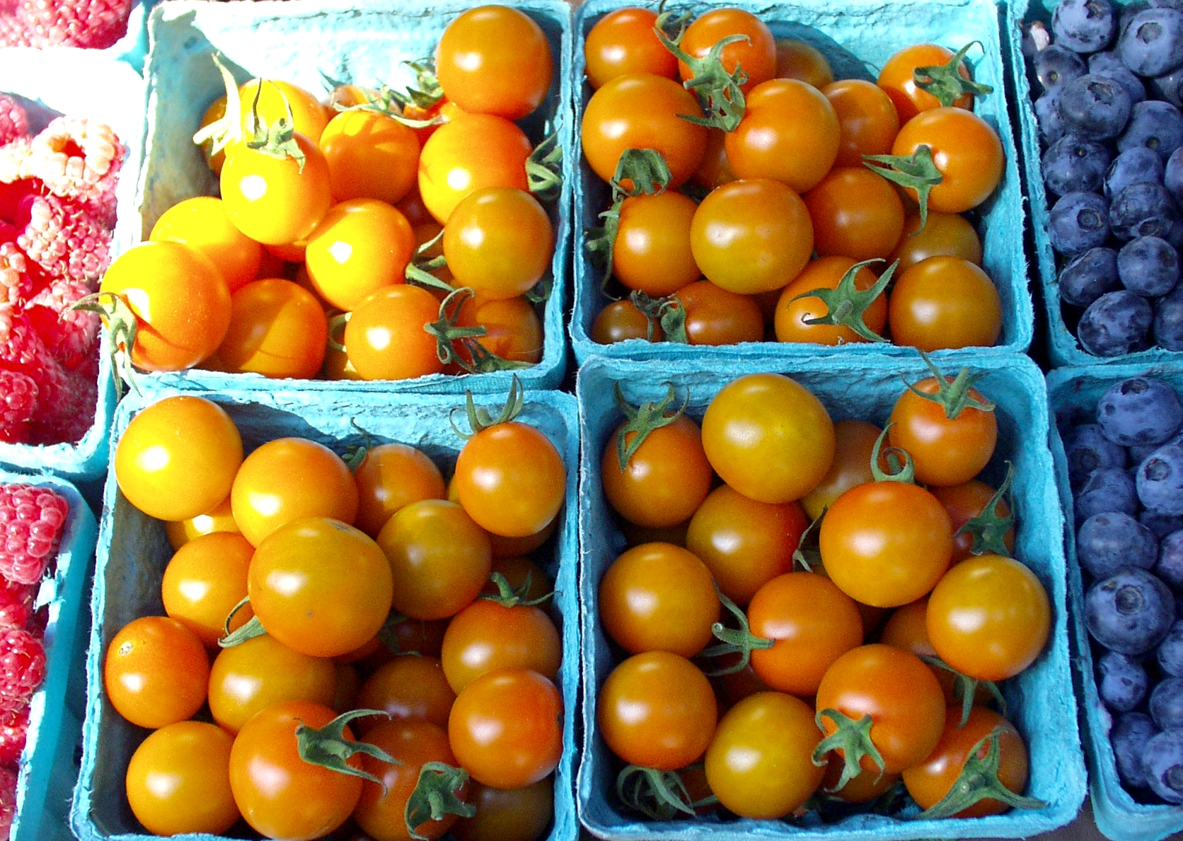 Sungold cherry tomatoes from Alm Hill. Photo copyright 2009 by Zachary D. Lyons.