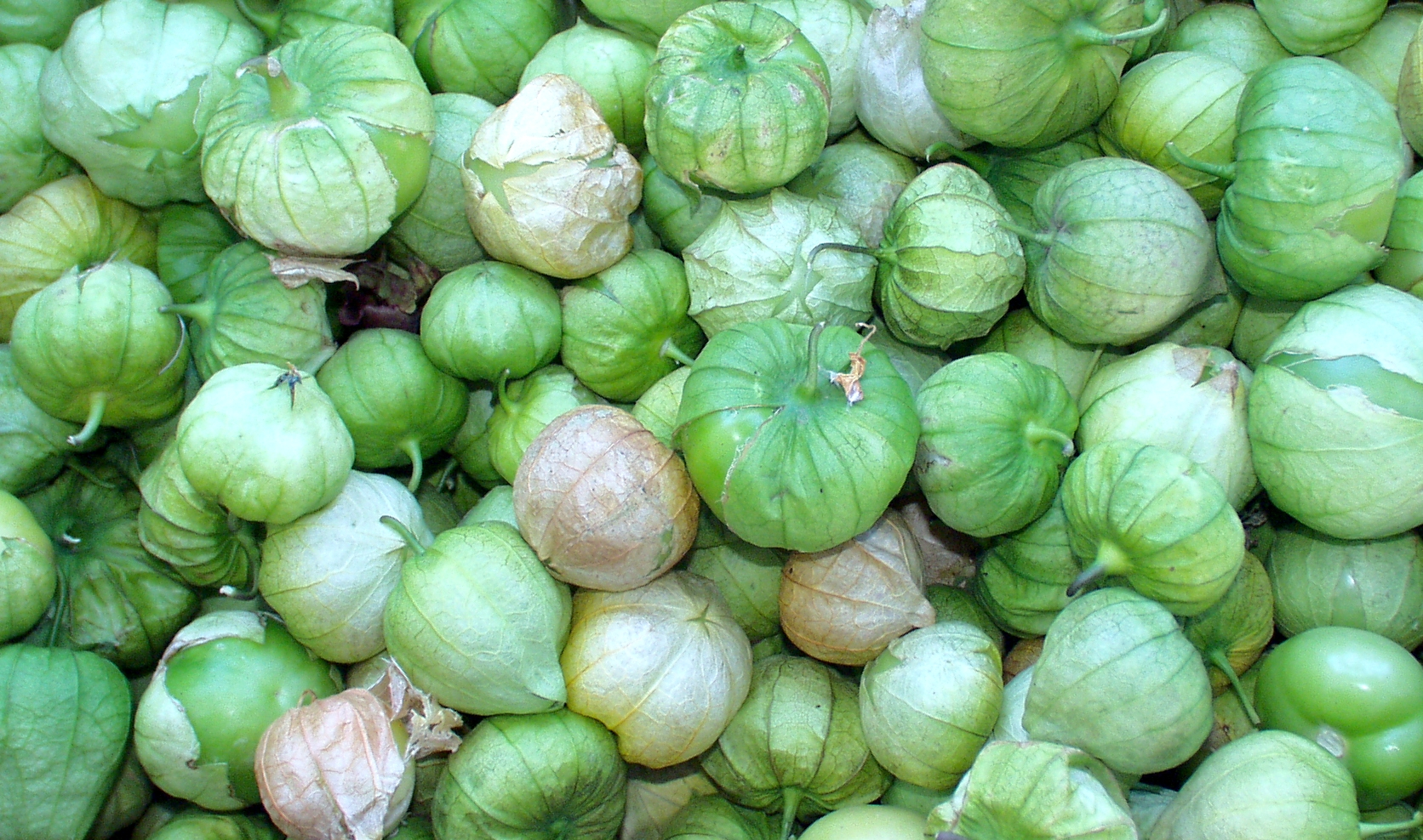 Tomatillos from Alvarez Organic Farms. Photo copyright 2009 by Zachary D. Lyons.