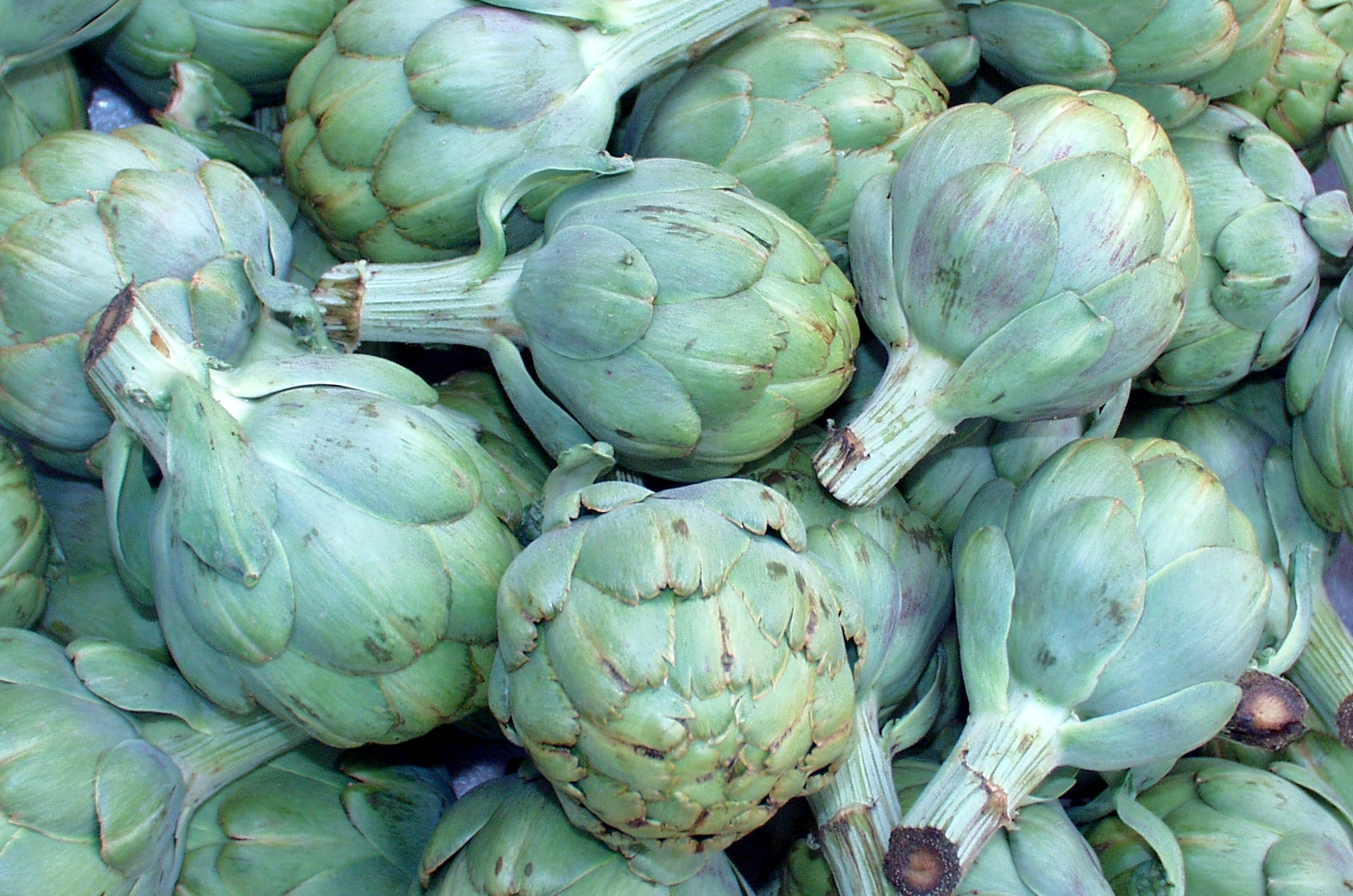 Organic artichokes from Billy's. Photo copyright 2009 by Zachary D. Lyons.
