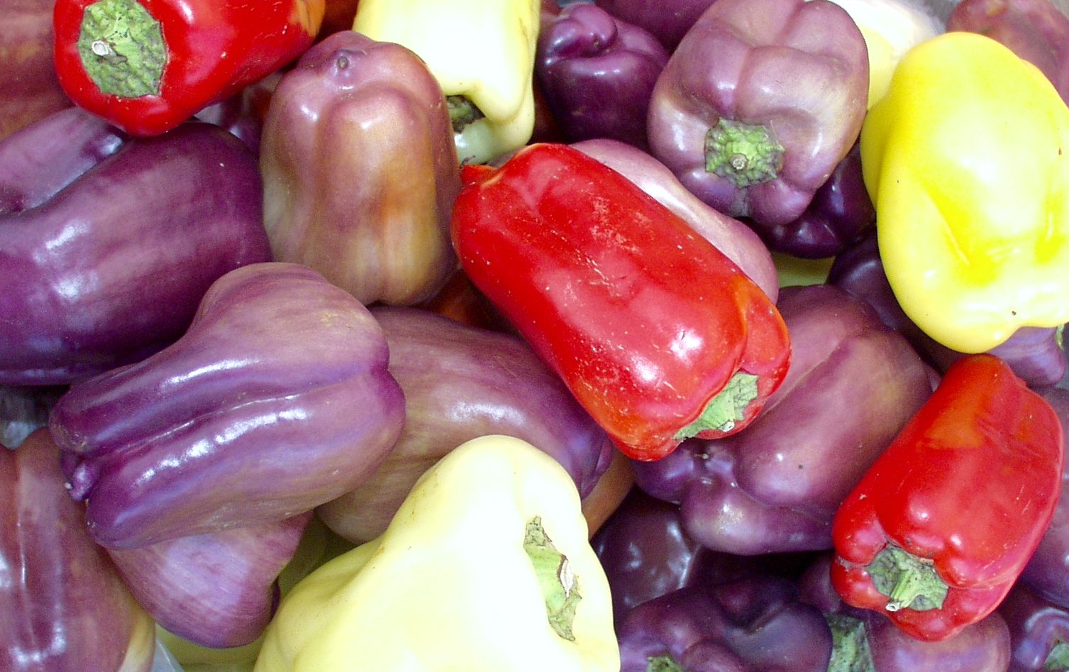Colorful Bell Peppers from Billy's. Photo copyright 2009 by Zachary D. Lyons.