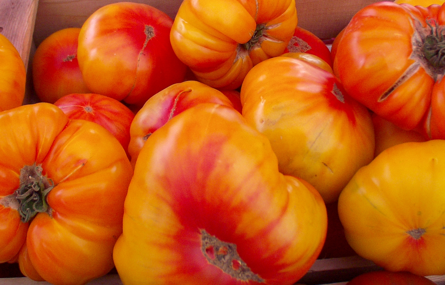 Striped German tomatoes from Billy's Organic Produce. Photo copyright 2009 by Zachary D. Lyons.