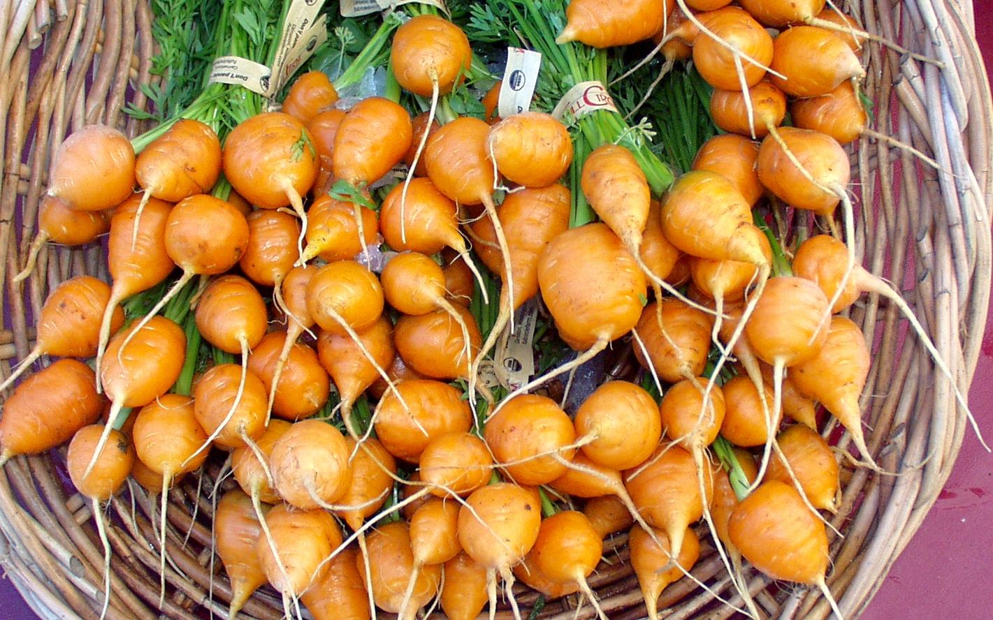 Thumbelina carrots from Full Circle Farm. Photo copyright 2009 by Zachary D. Lyons.