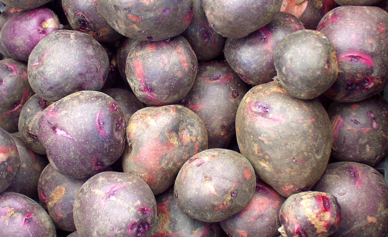 Viking Purple potatoes from Olsen Farms. Photo copyright 2009 by Zachary D. Lyons.