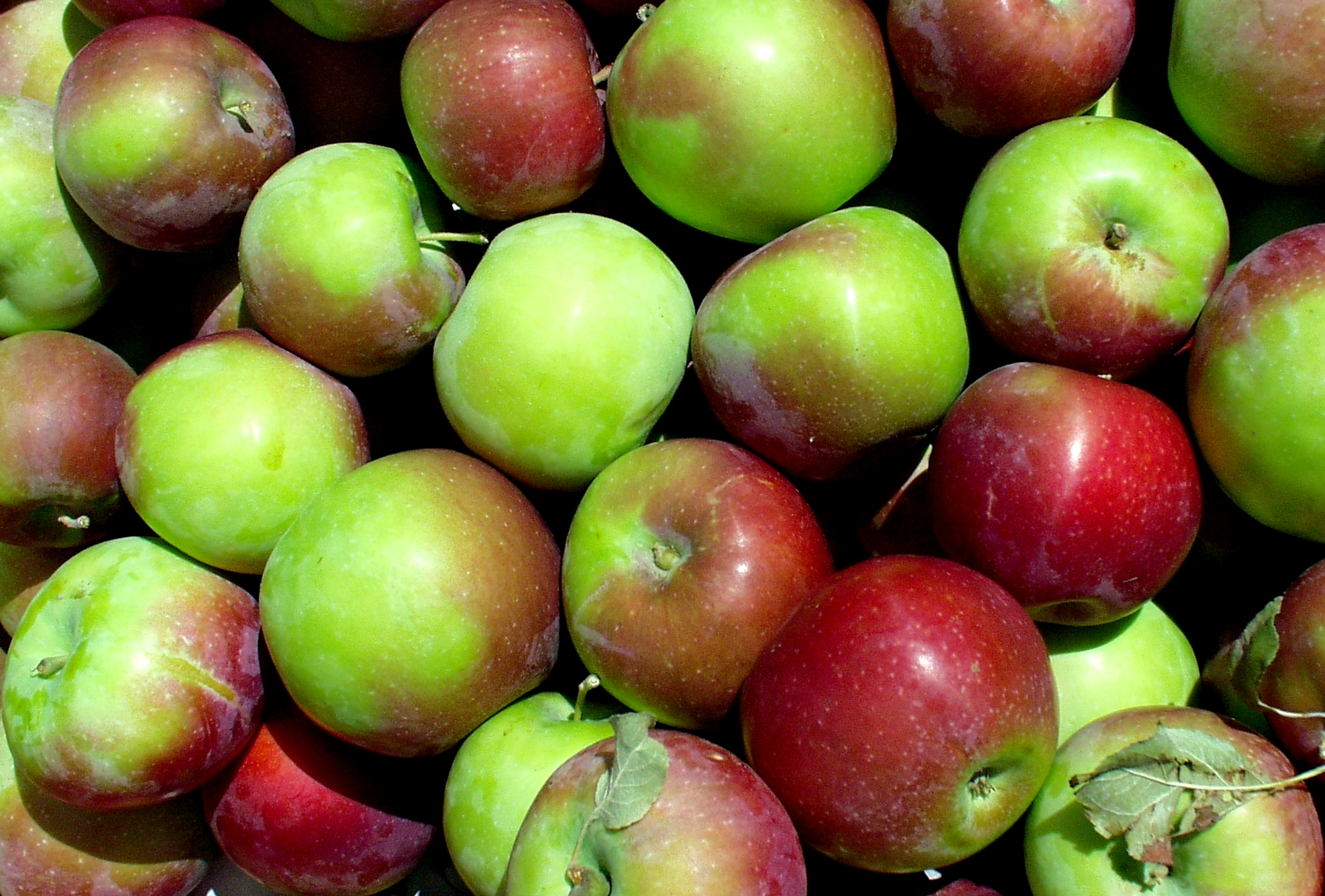Lorry apples from ACMA. Photo copyright 2009 by Zachary D. Lyons.