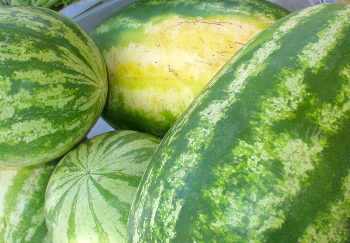 Watermelons from Ayala Farms. Photo copyright 2009 by Zachary D. Lyons.