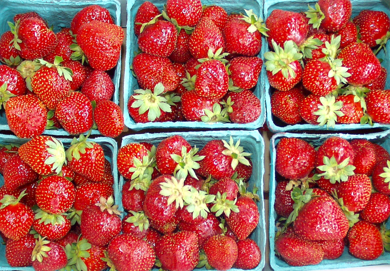 Late-season strawberries from Collins Family Orchards. Photo copyright 2009 by Zachary D. Lyons.