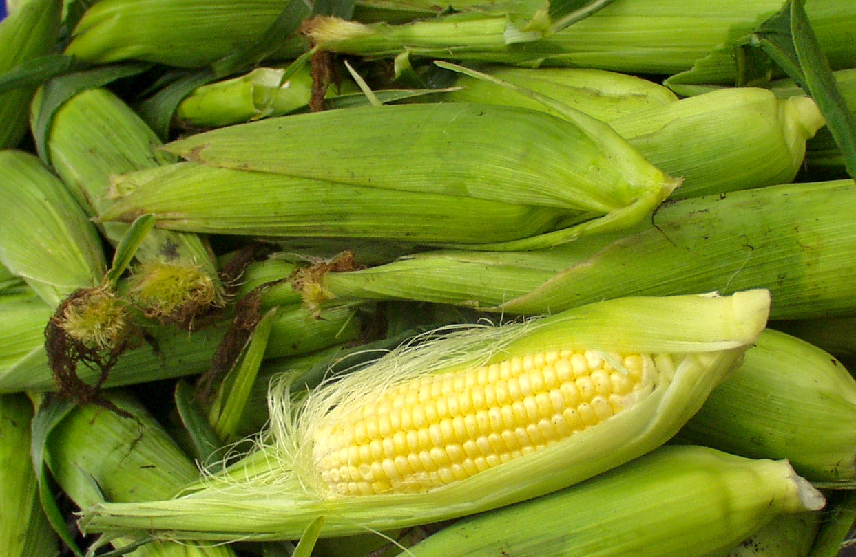 Sweet corn from Stoney Plains. Photo copyright 2009 by Zachary D. Lyons.
