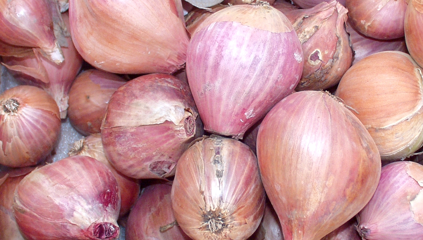 Shallots from Billy's. Photo copyright 2009 by Zachary D. Lyons.