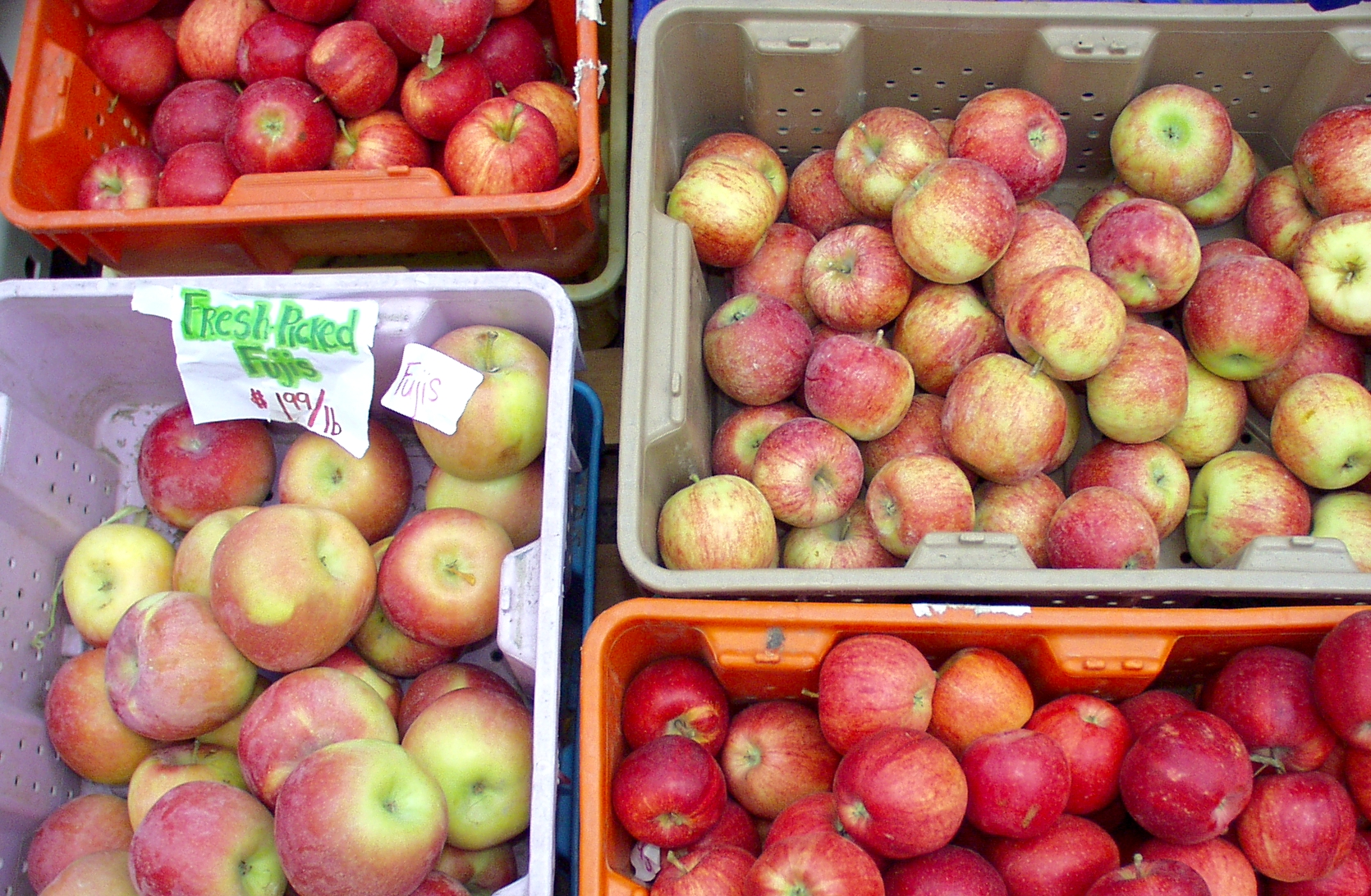 Freshly picked apples from Lyall Farms. Photo copyright 2009 by Zachary D. Lyons.