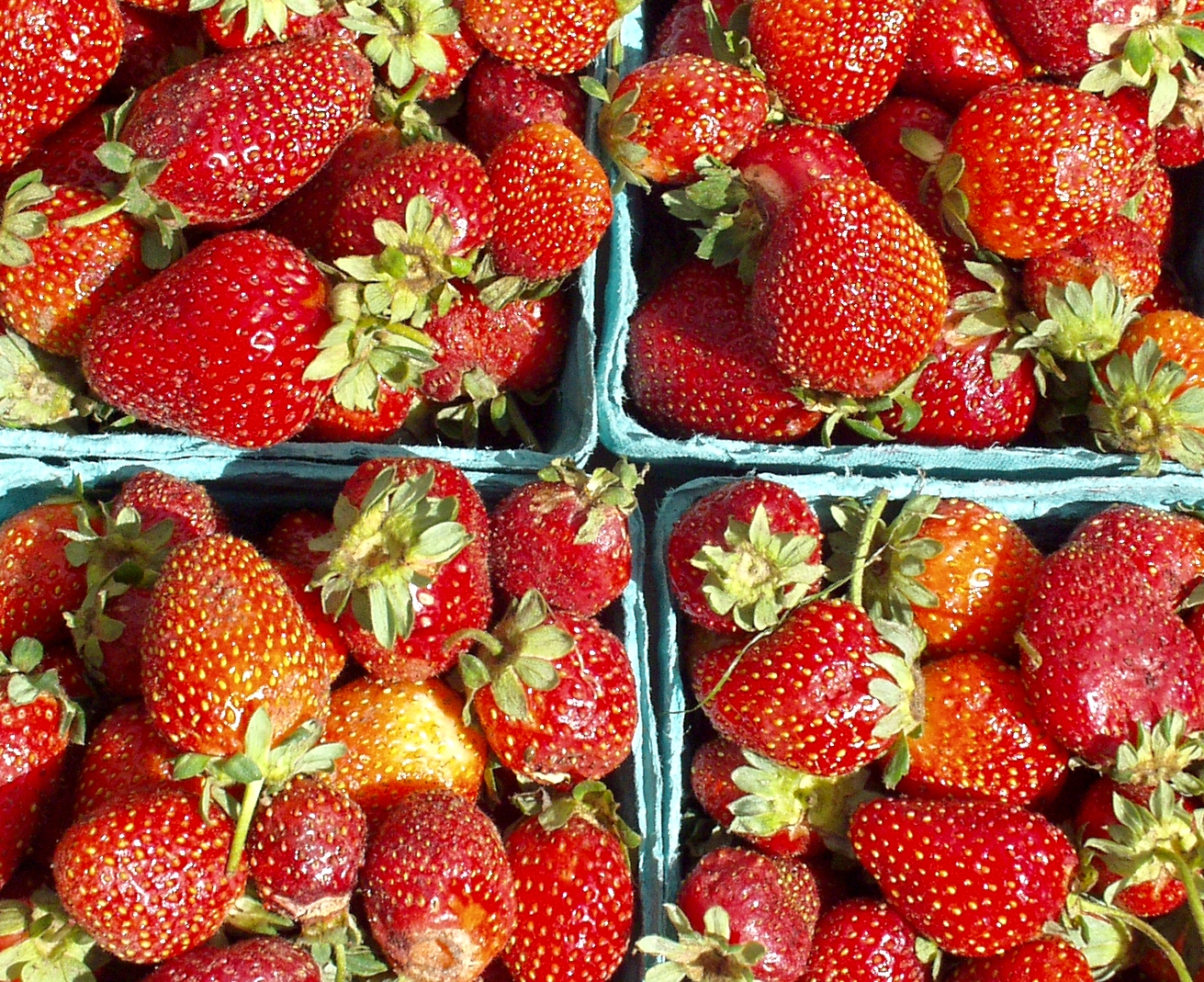 Everbearing strawberries from Sidhu Farms. Photo copyright 2009 by Zachary D. Lyons.