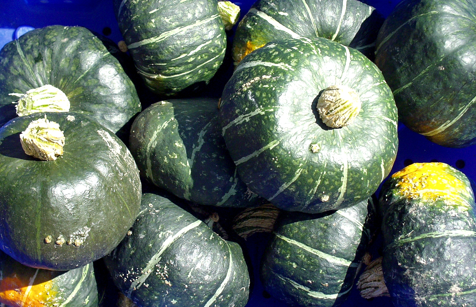 Winter squash from Summer Run. Photo copyright 2009 by Zachary D. Lyons.