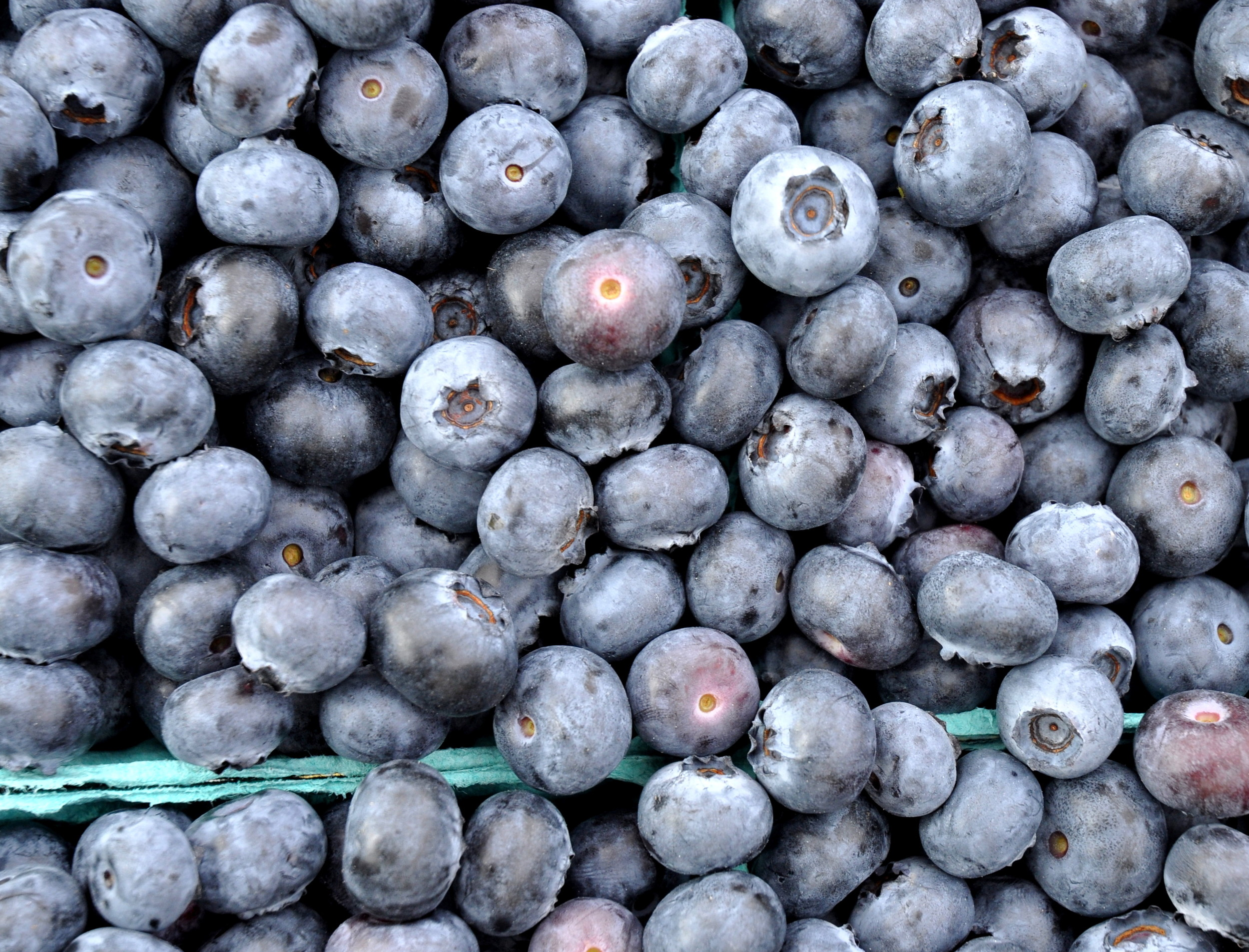 Organic blueberries from Whitehorse Meadows Blueberry Farm. Photo copyright 2011 by Zachary D. Lyons.