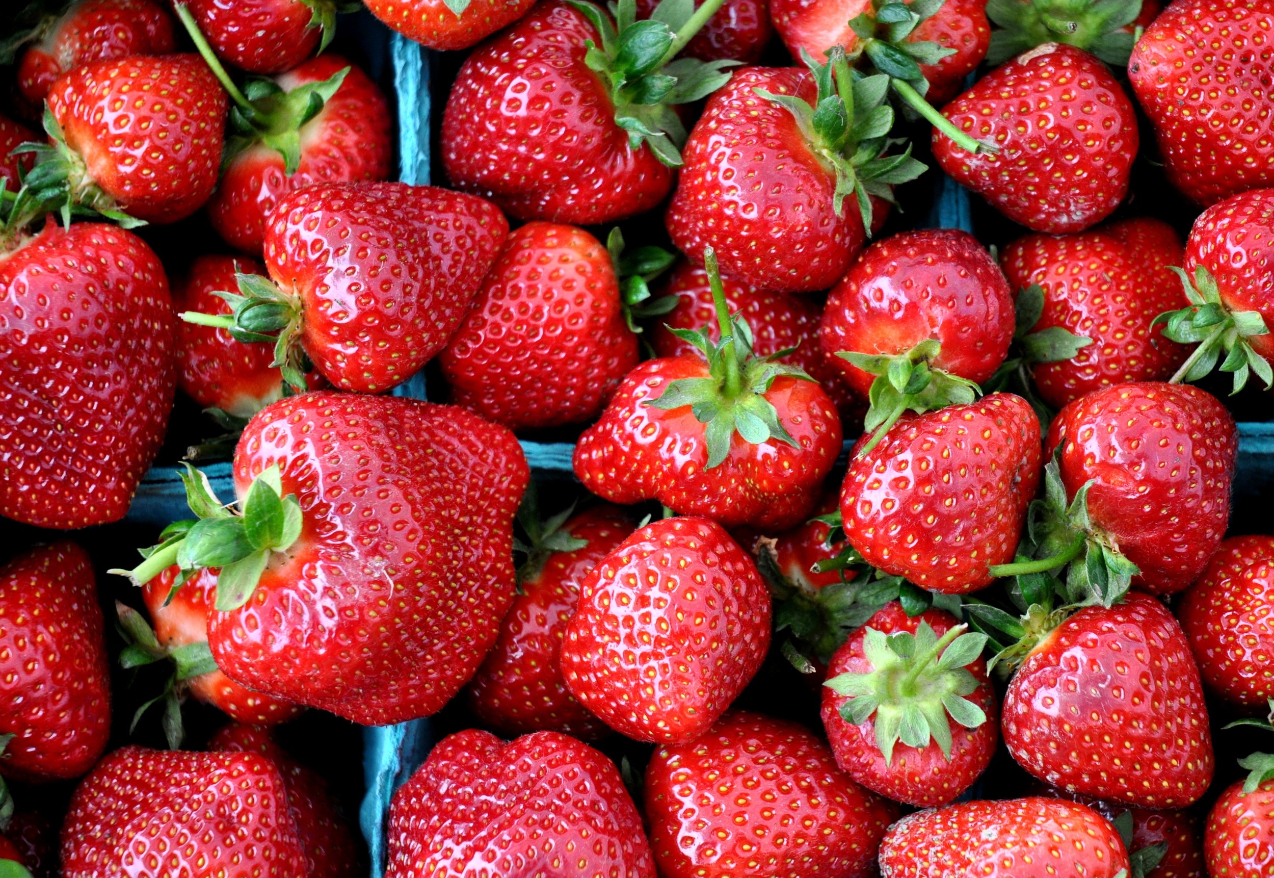 Fresh strawberries from Gaia's Natural Goods. Photo copyright 2012 by Zachary D. Lyons.