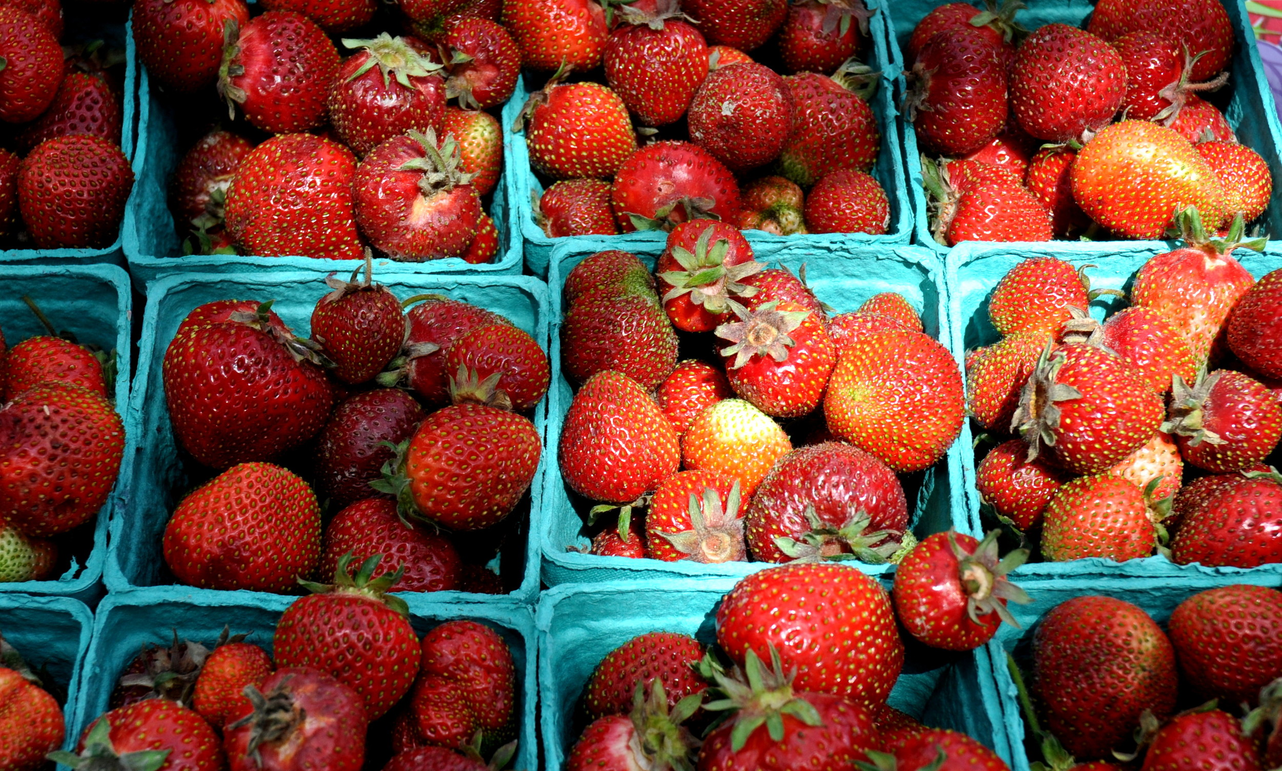 Strawberries from Hayton Berry Farms. Photo copyright 2012 by Zachary D. Lyons.