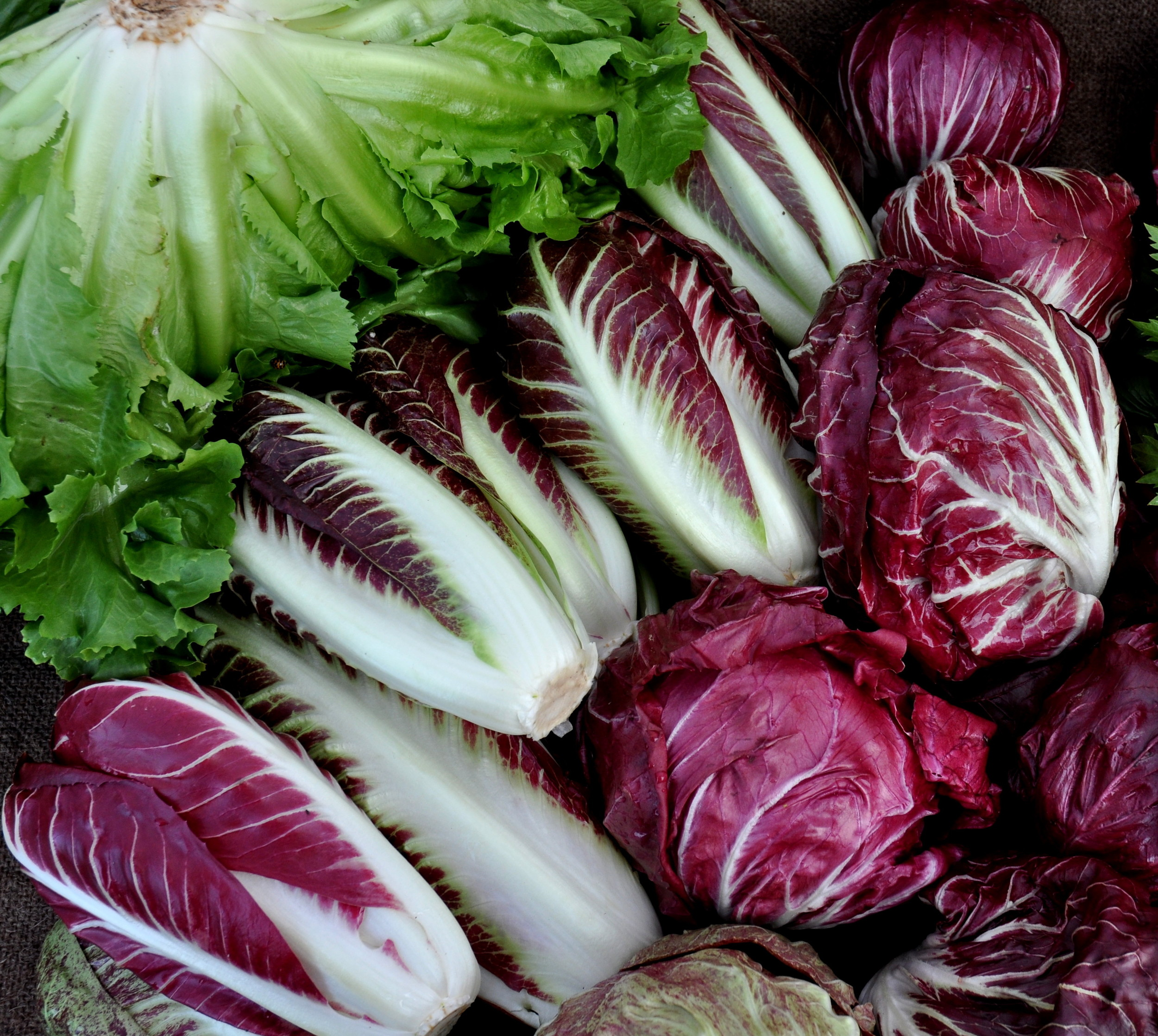 Chicories from One Leaf Farm. Photo copyright 2012 by Zachary D. Lyons.
