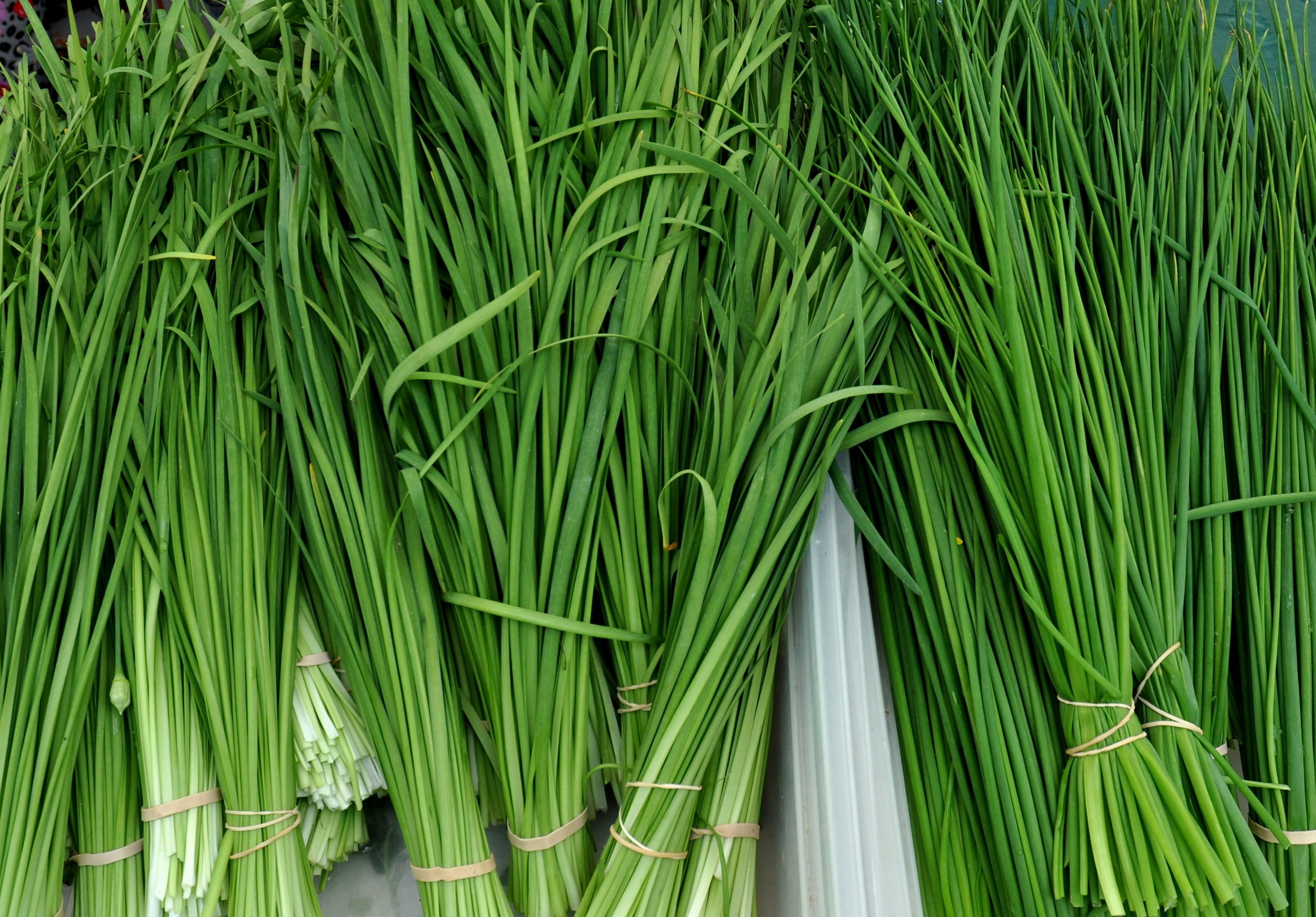 Garlic chives (left) and chives from Children's Garden. Photo copyright 2013 by Zachary D. Lyons.