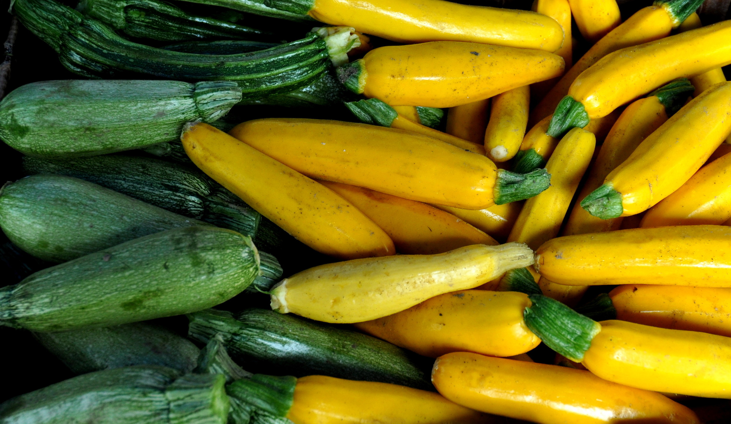 Summer squash from Alvarez Organic Farms. Photo copyright 2013 by Zachary D. Lyons.