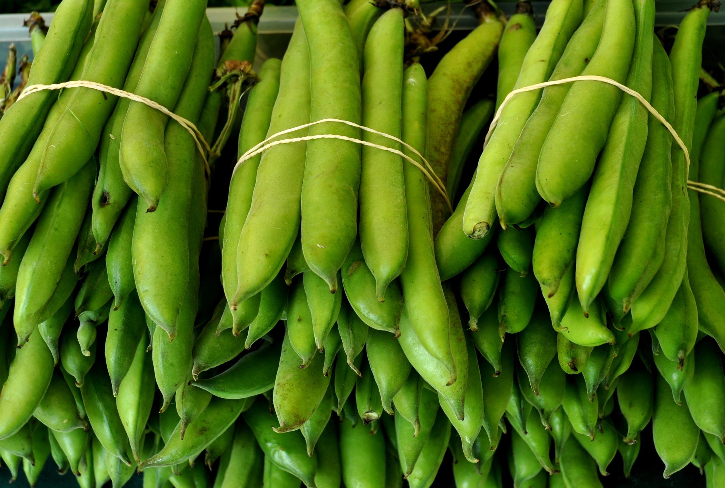 Fava beans from Children's Garden. Photo copyright 2013 by Zachary D. Lyons.