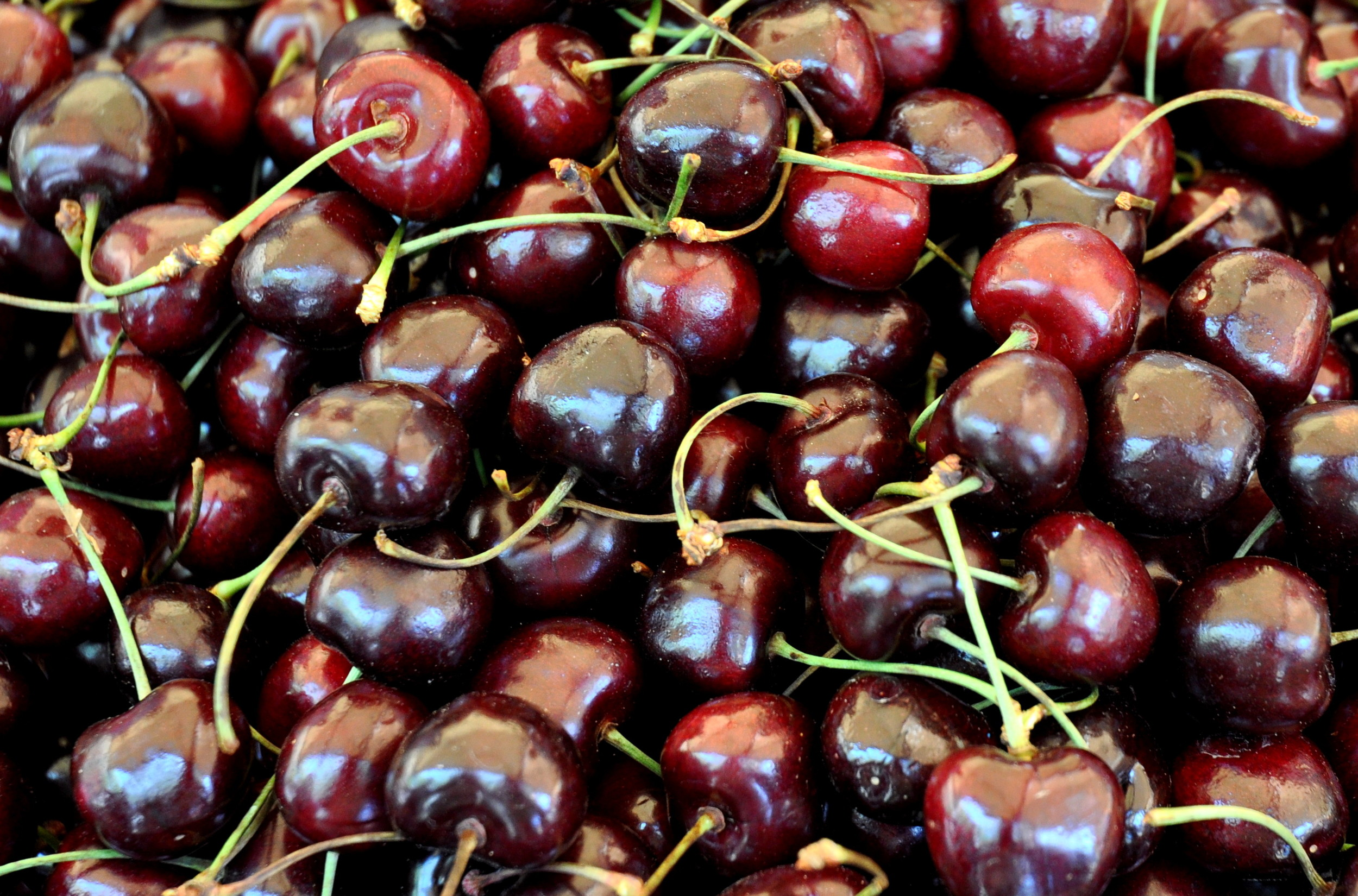 Chelan cherries from Collins Family Orchards. Photo copyright 2012 by Zachary D. Lyons.