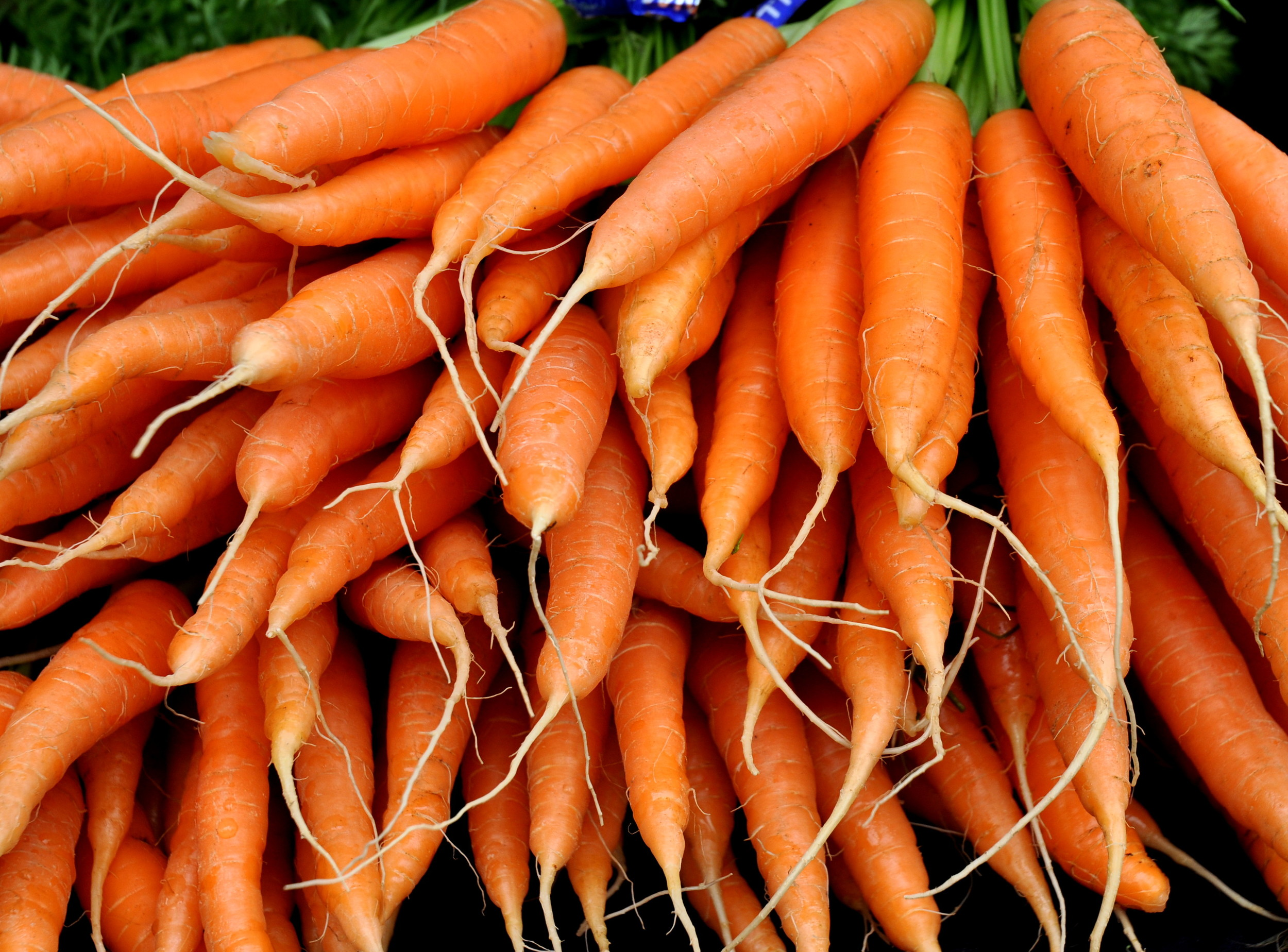 Organic carrots from Kirsop Farm. Photo copyright 2013 by Zachary D. Lyons.