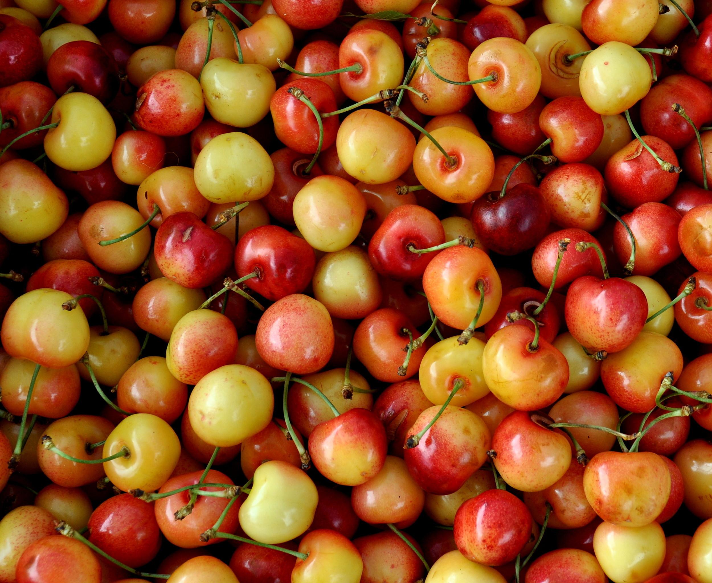 Rainier cherries from Lyall Farms. Photo copyright 2013 by Zachary D. Lyons.